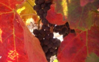 vinaroja