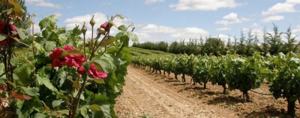 Ribera del duero at gourmet madrid tours