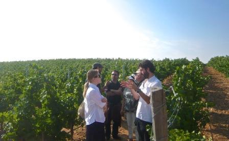 Madrid Wine Tour Vines